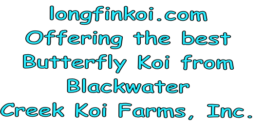 longfinkoi.com